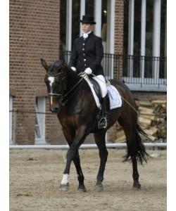 Veste Equitation PLR - Classic