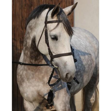 Howlett/Thiedeman Training Aid PLR Equitation