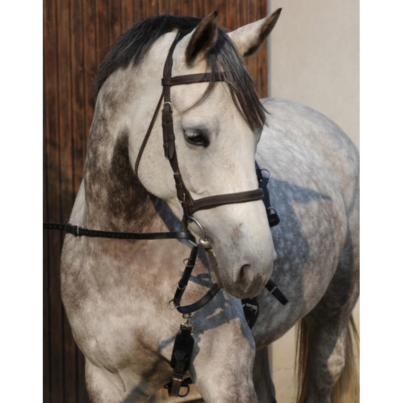"""Enrênement Le Rolland PLR """"L'Original""""... équilibre, amplitude, locomotion et incurvation du cheval sans stress ni opposition..."""