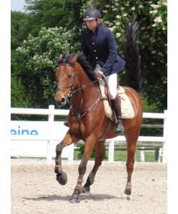 Veste Equitation PLR - Revolution